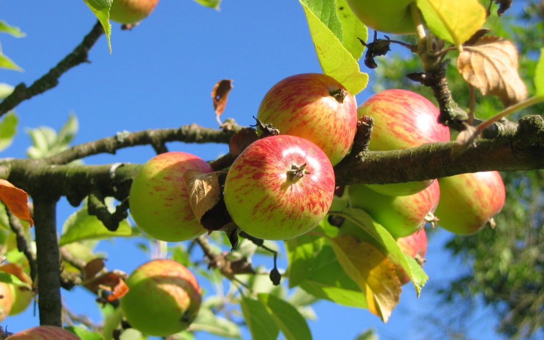 apple trees | Ouray restaurants